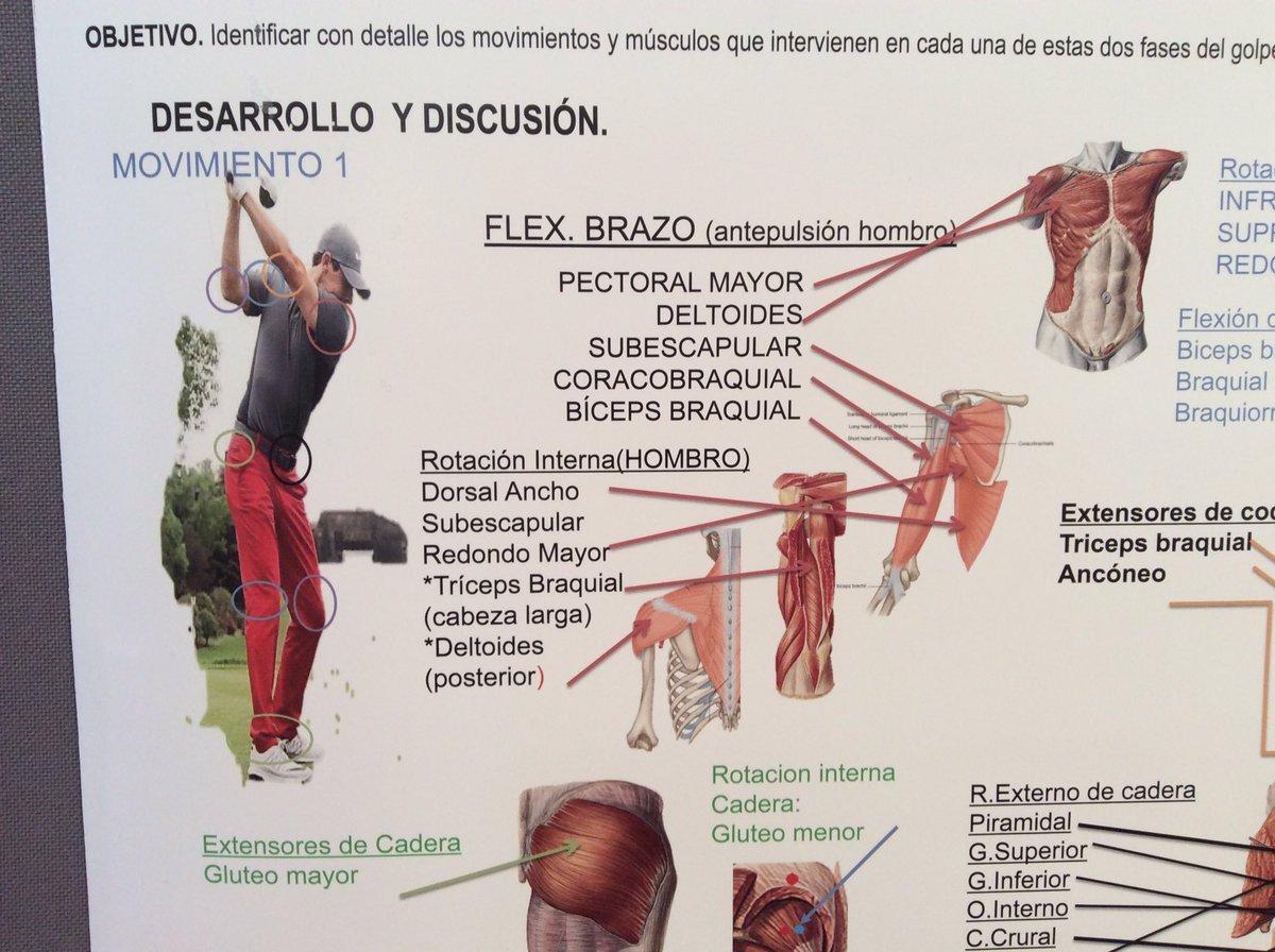 Atractivo El Desarrollo Del Deltoides Composición - Anatomía de Las ...