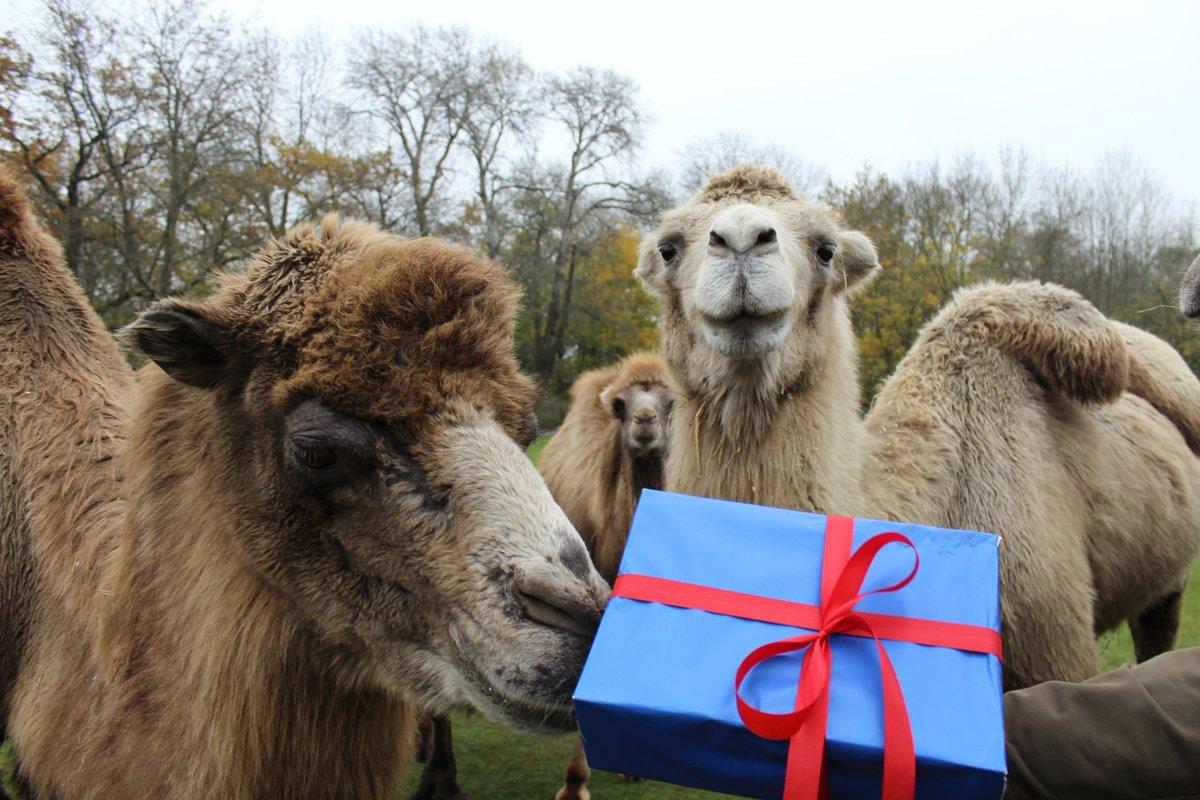 Zoo Tierpark Berlin On Twitter Am 24 Dezember Ist Der Eintritt