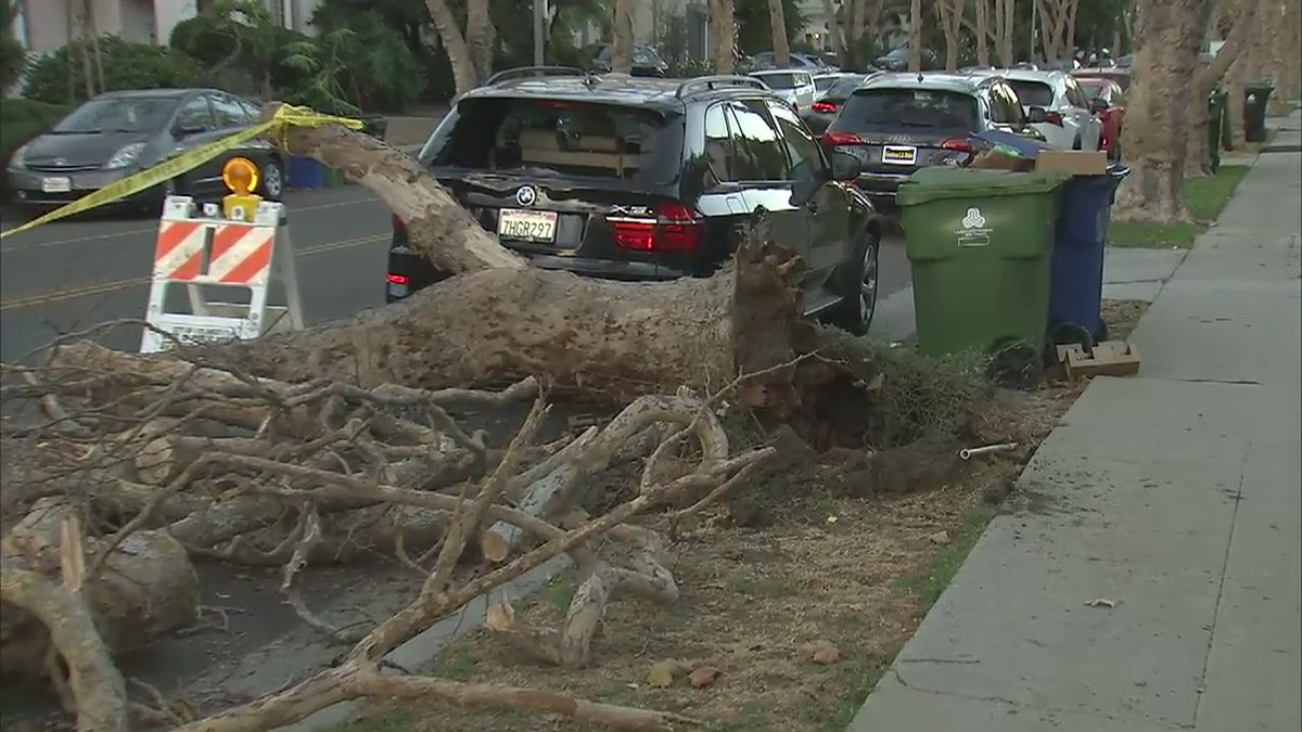 Damaging #santaanawinds down a tree across Beverly Grove street. @GigiGraciette reports. https://t.co/NW3ogG2SbX