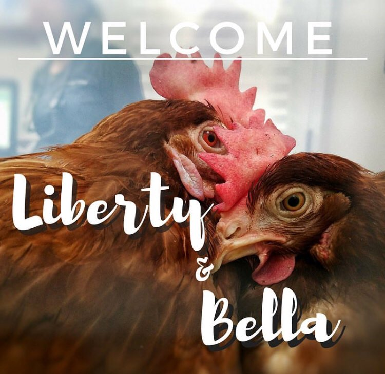 The Save Movement On Twitter Meet Liberty Bella Liberation