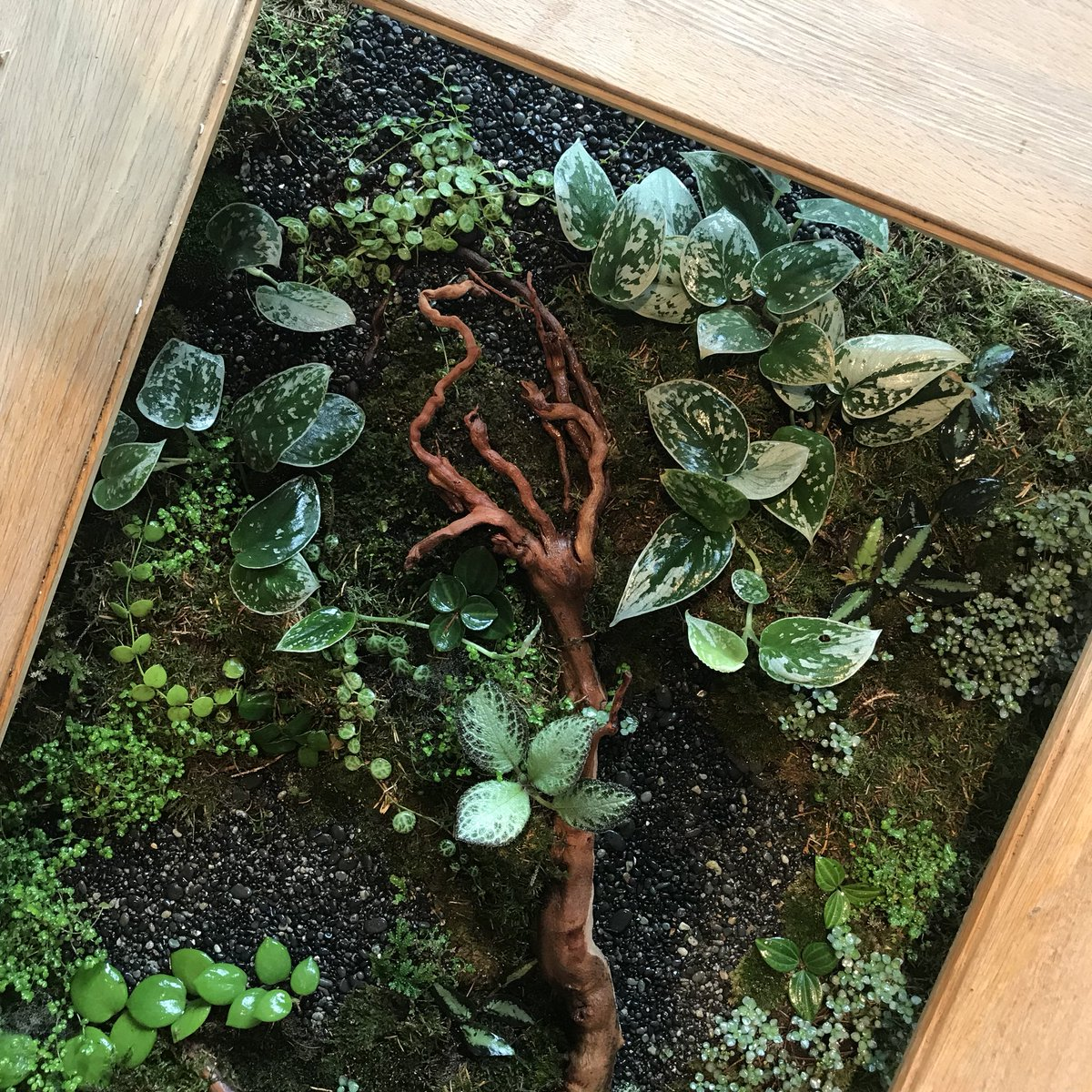 James Wong On Twitter So My Coffee Tablearium Experiment Is Still Going Strong Moss Seems To Be Settling In Nicely Mosslove
