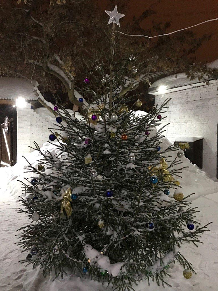 Фото елка во дворе