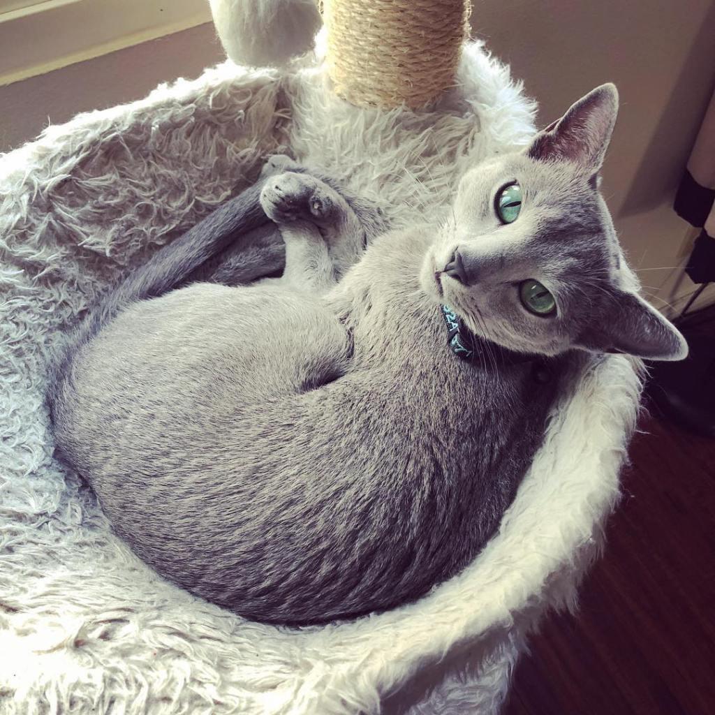 Really Cute Cats ReallyCuteCats