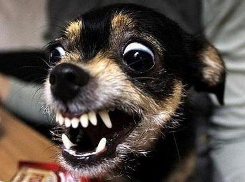 Бешеная собака картинка прикол