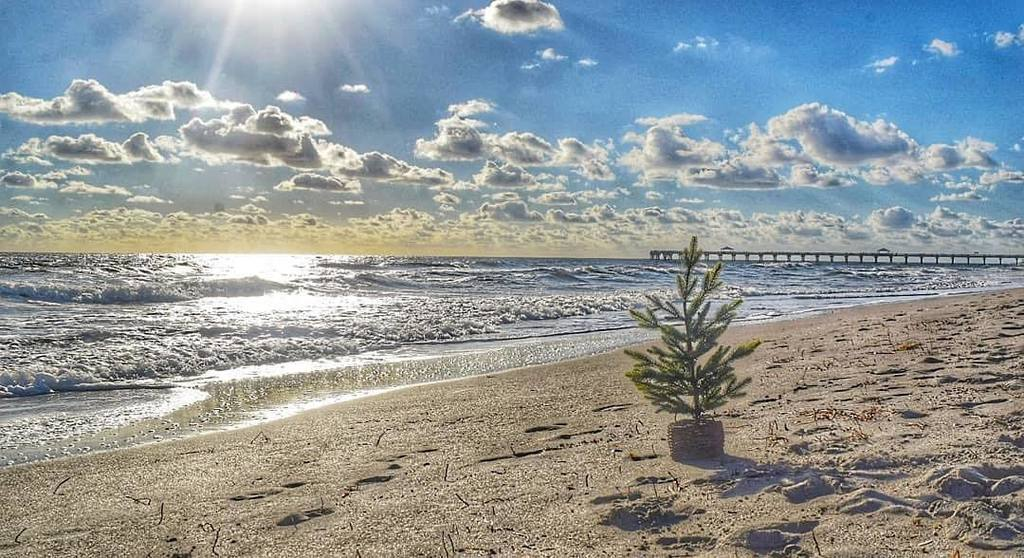 RT @VISITFLORIDA: This is what they're hoping to find under the tree. 😉 #LoveFL Credit: https://t.co/NU4DjwHoQI https://t.co/8esUPulga2