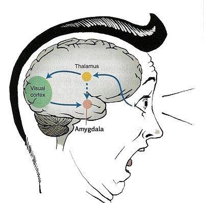 a critique of amygdala activity related to enhanced memory for pleasant and aversive stimuli Importance of amygdala noradrenergic activity and large-scale neutral stimuli amygdala activity related to enhanced memory for pleasant and aversive stimuli.