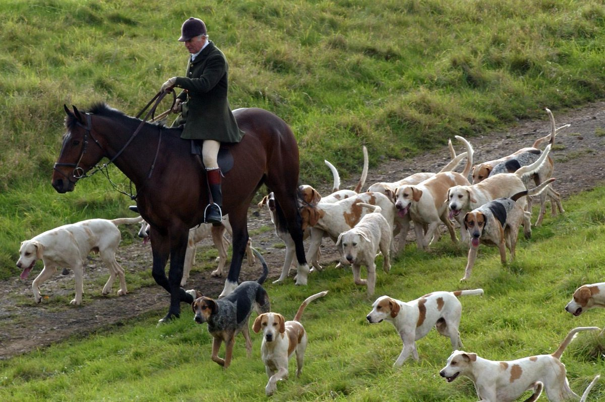an argument against hunting foxes for sport