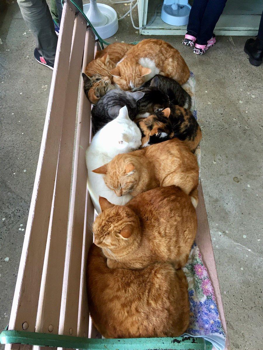 猫団子を存分に抱っこして来た