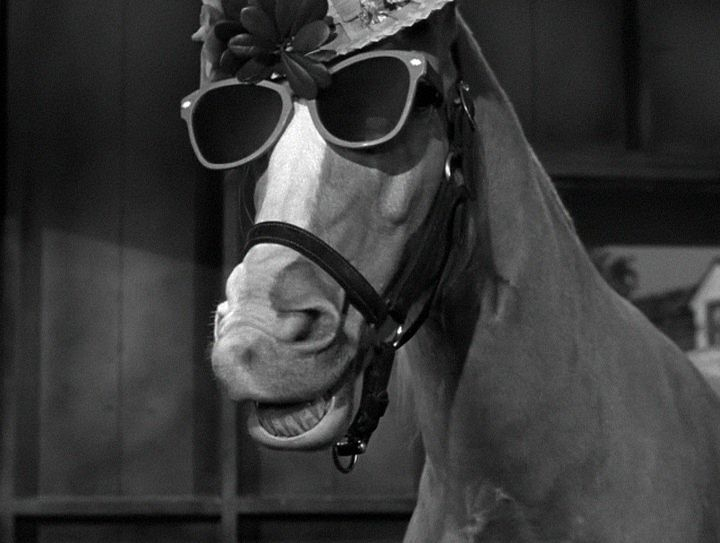 """Sally Faulkner on Twitter: """"Mr Ed - the talking         horse was a stable genius.… """""""