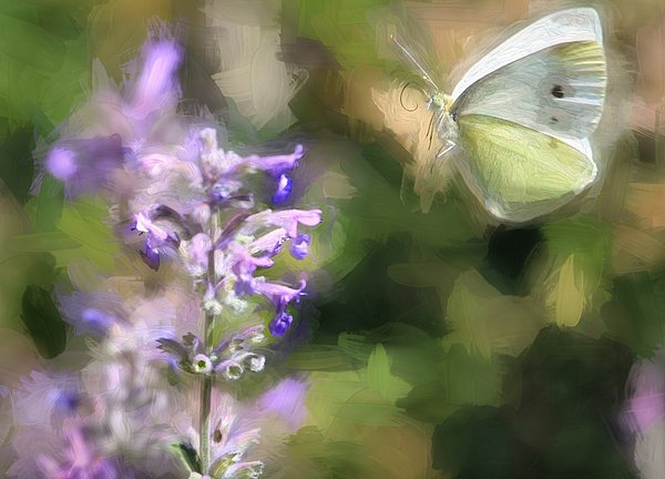 RT @nevada2008: New artwork for sale! - 'Cabbage White - Painterly' - https://t.co/uqx89JnUeM @fineartamerica https://t.co/A7pViBDAO7