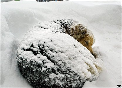 EXTREME COLD WEATHER ALERT  NJ State Law prohibits leaving pets outside in sub-freezing temperatures for more than 30 min unless you have proper shelter as defined by law.  If you witness a violation, call PCSPCA at (973) 773-0459.  Please... Bring 'em in!