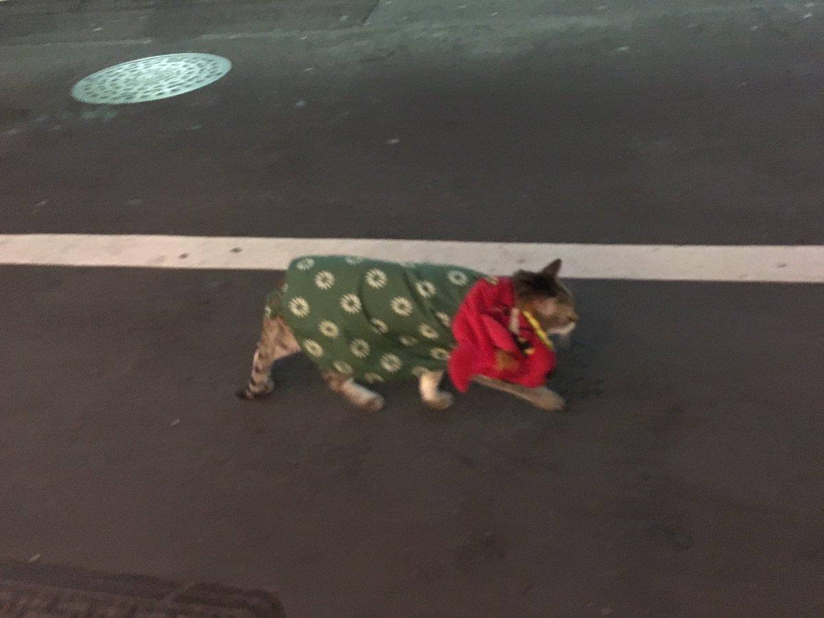 渋谷で獅子舞の格好してるネコが歩いててかなりときめいた
