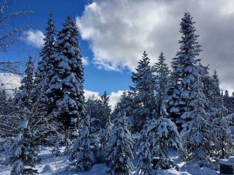 #snow covered #trees in the Southern #oregon #mountains  #roguevalleyvideo https://t.co/YPaF5FbmvC