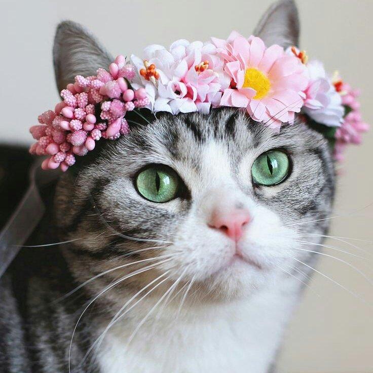 cute cats amp kittens cutecatskittens twitter