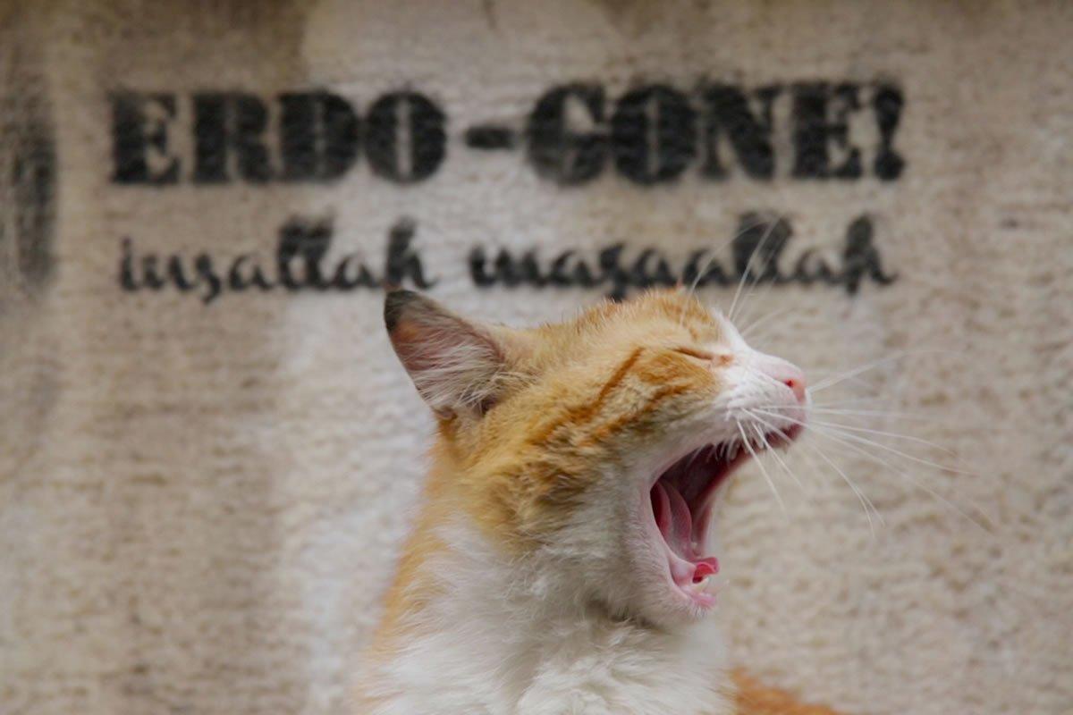 RT @Citazine #Cinema #Kedi, des chats et des hommes explore l'incroyable liberté des centaines de milliers de félins qui vivent entre état sauvage et domestication dans les rues d'Istanbul. Un docu au poil ! 😺🐱😻🐈 #Kedilefilm https://t.co/J7QE28wg1b