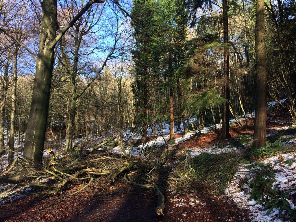 @WoodlandTrust stunning walk in the local woods - saw 3 deer & beautiful buzzard @BBCSpringwatch