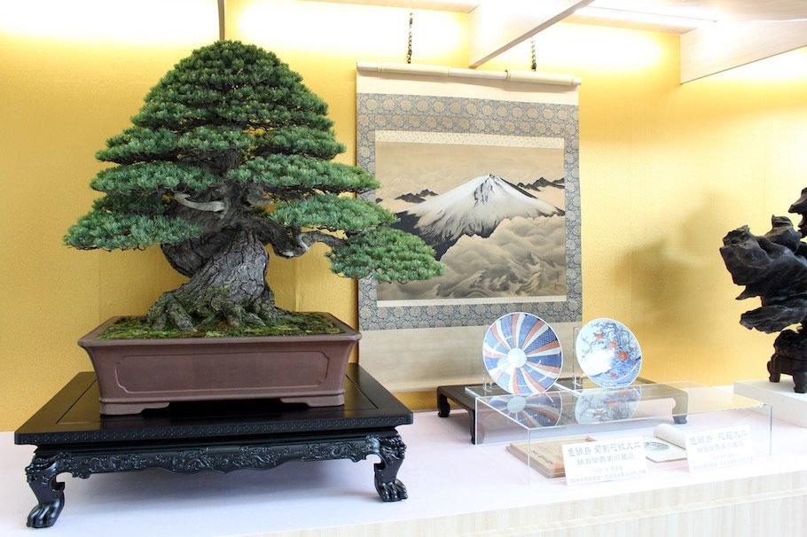 bonsai empire bonsaiempire twitter. Black Bedroom Furniture Sets. Home Design Ideas