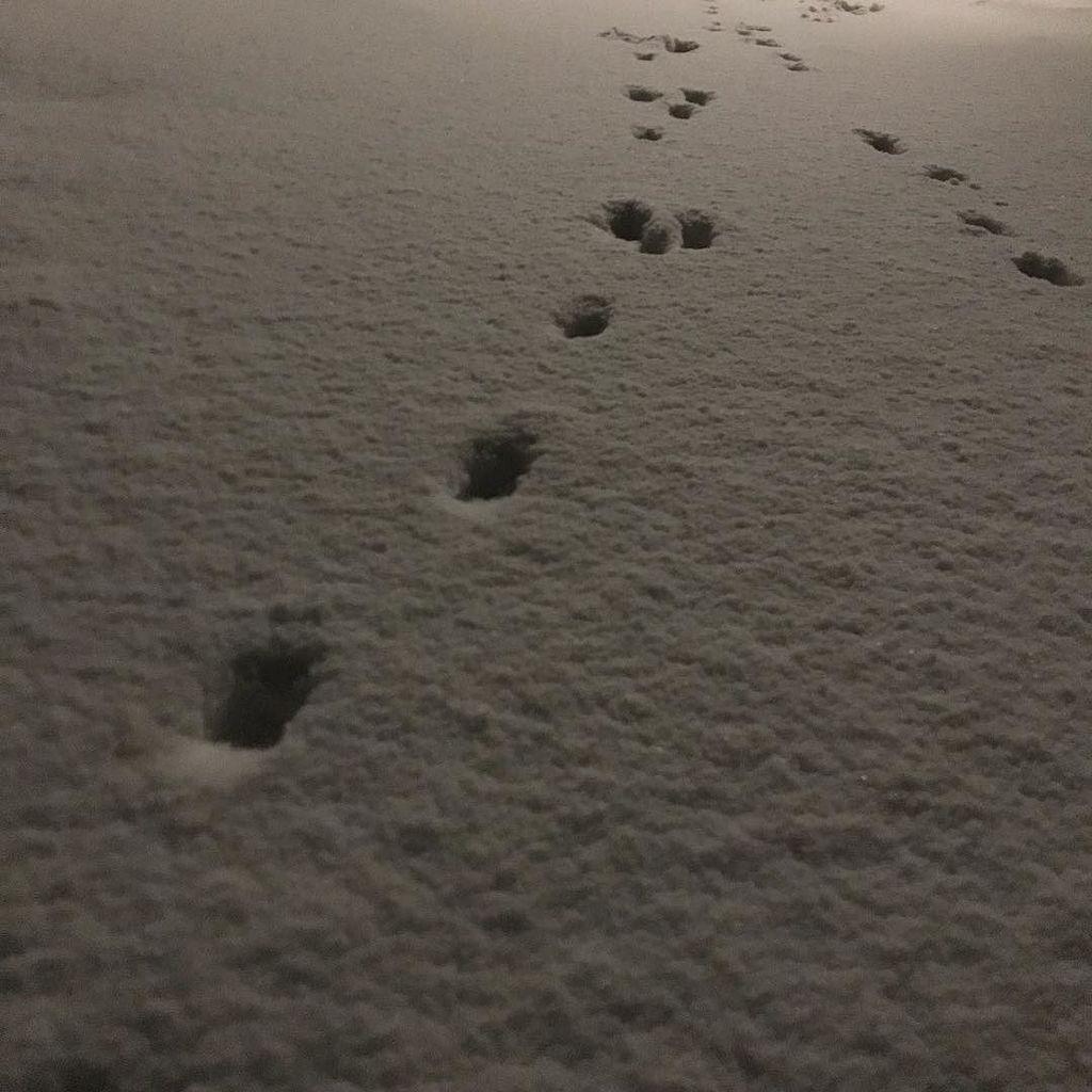 「ねー、このあしあと、なに?」 #近いよ米沢 #小野川温泉 #地域猫 https://t.co/kLncMjpAkZ