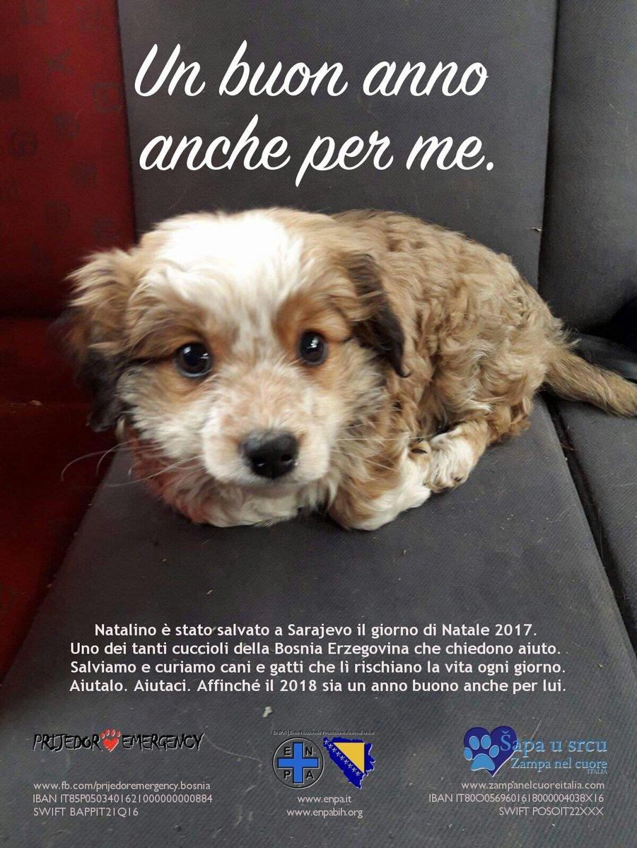 Buon Natale Cani Della Biscia.Salvataggi Hashtag On Twitter