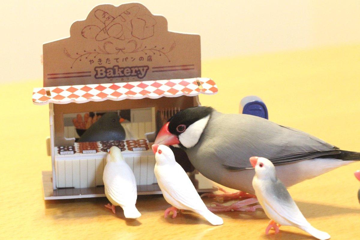 test ツイッターメディア - 新装開店したパン屋の行列の先頭集団に、果敢にも横から行く、無邪気なぶんちょをご覧下さい。#文鳥 #パン屋 #セリア https://t.co/ZlgKAaRzbG