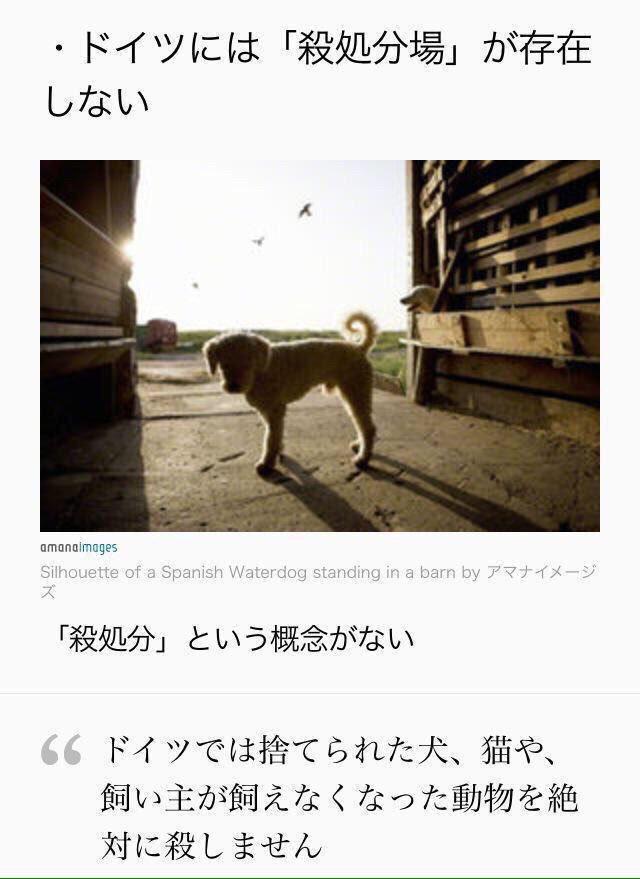 年間何十万もの犬や猫を殺処分してる日本はドイツを見習って欲しい。 なんの罪もない動物がなぜ殺されなければならないんだろう… #闇