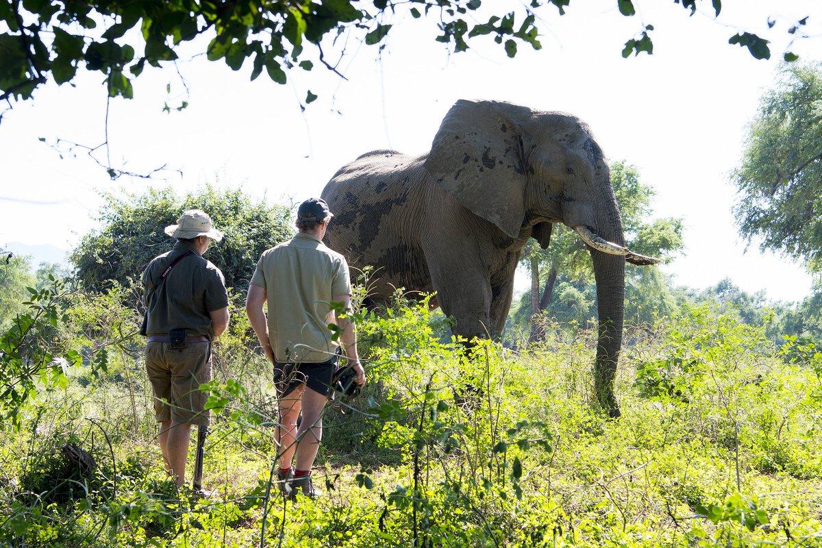 @Drapht Bushlife Safaris in Mana Pools N...
