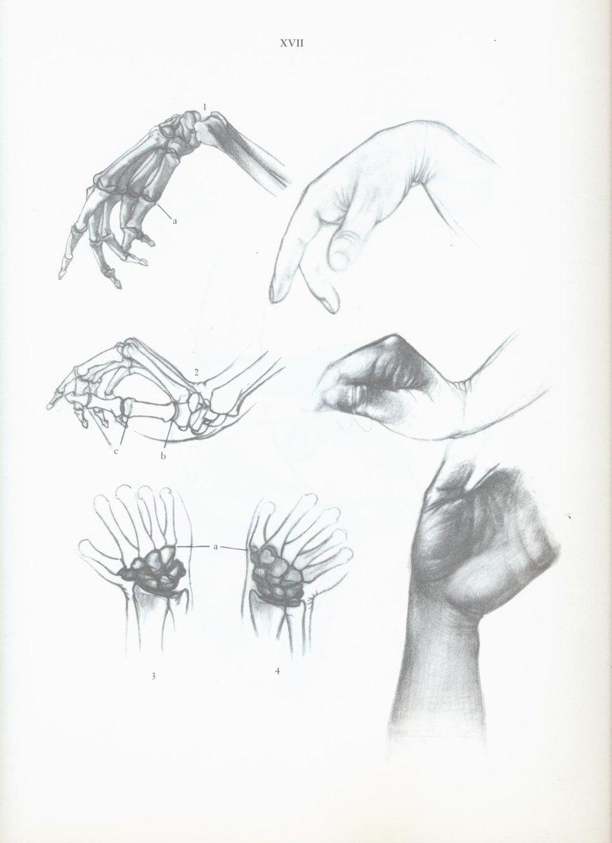 Gemütlich Gesichtsanatomie Fotos - Anatomie Ideen - finotti.info