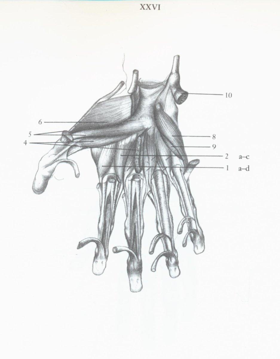 Jrgen On Twitter Anatomie Fr Knstler Mvszeti Anatmia