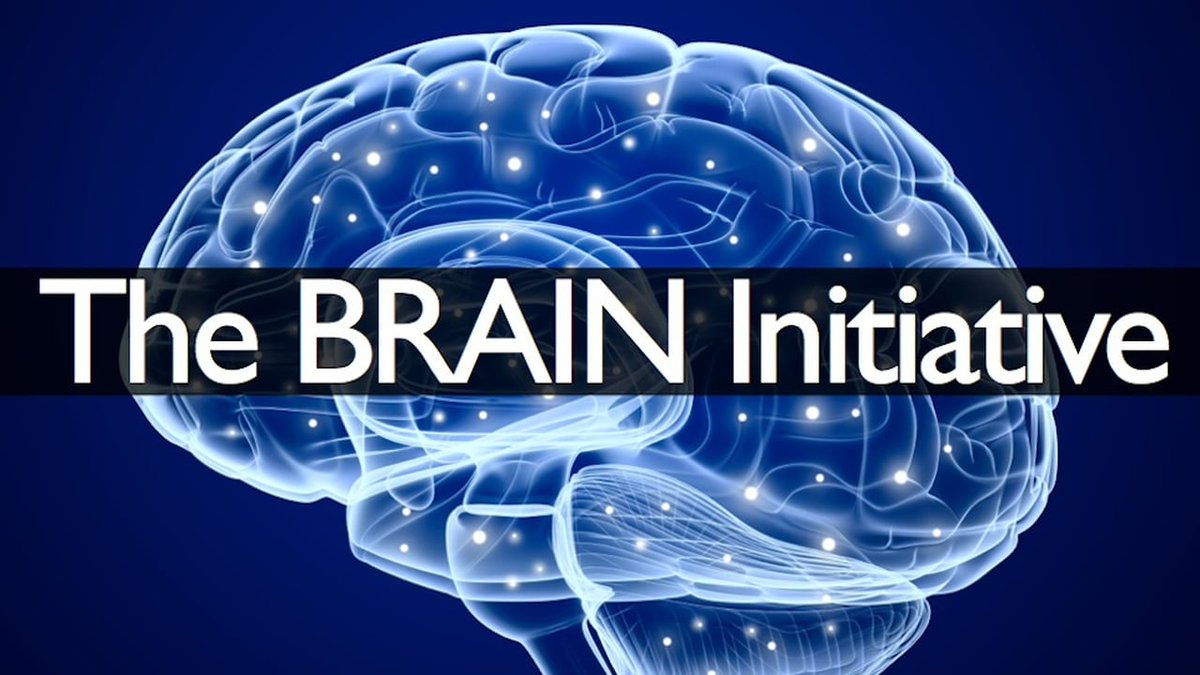 Image result for nih brain initiative logo
