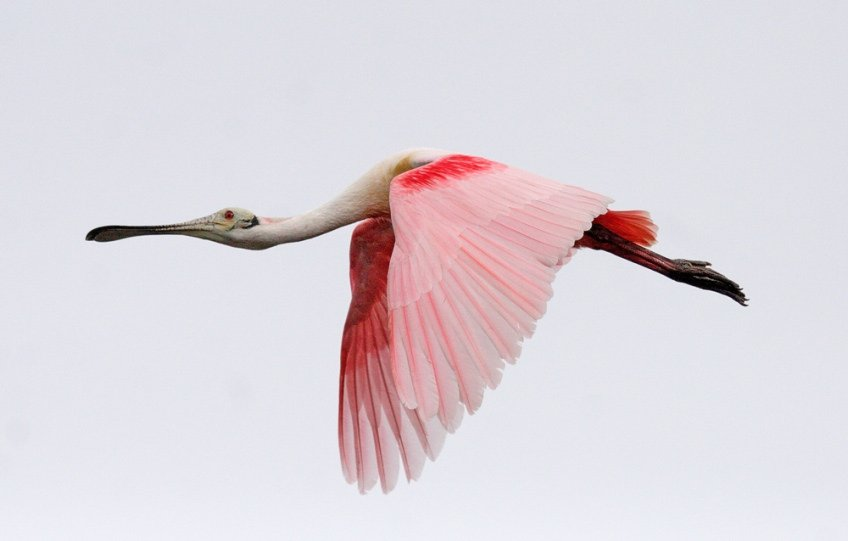 Check out the Great Florida Birding &amp...