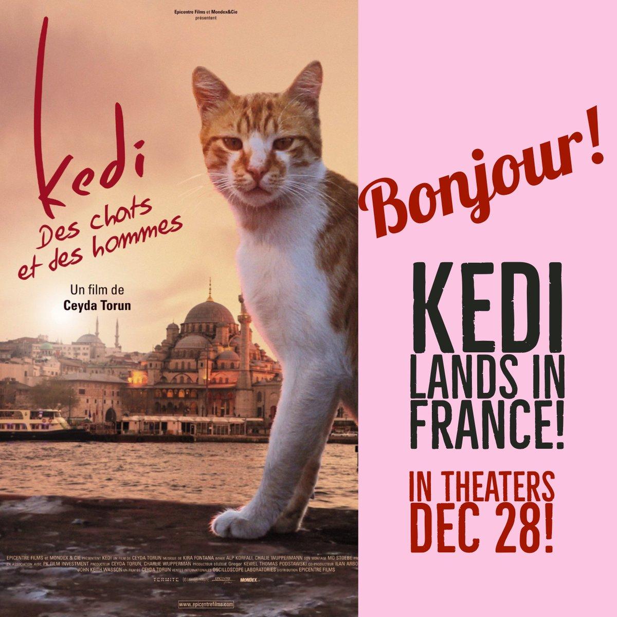 kedi full movie english subtitles