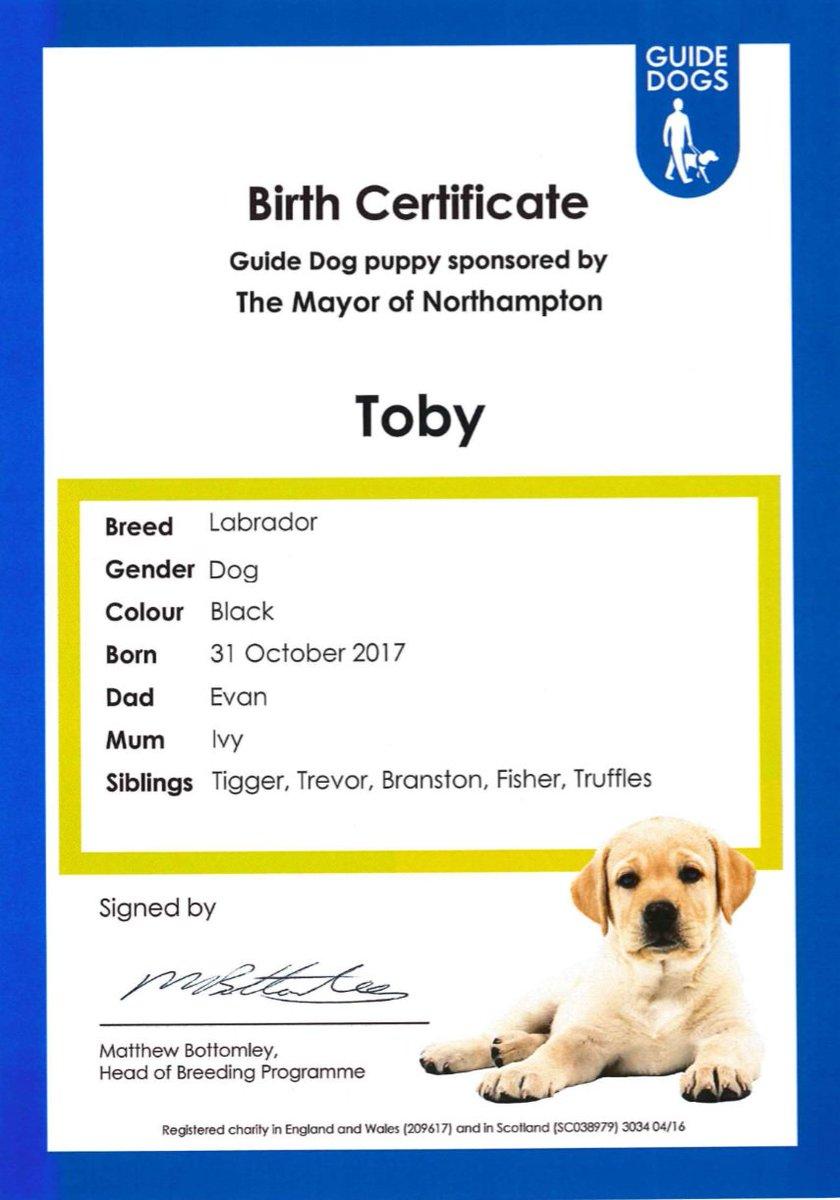 Christopher malpas cjmalpas twitter guide dog puppy toby a black labrador dog born 31102017 mum ivy dad evan tigger trevor branston fisher trufflespicitternyz0rtuiuk 1betcityfo Image collections