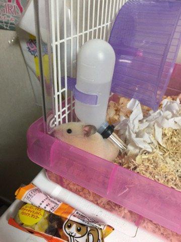 Pornhub hamster
