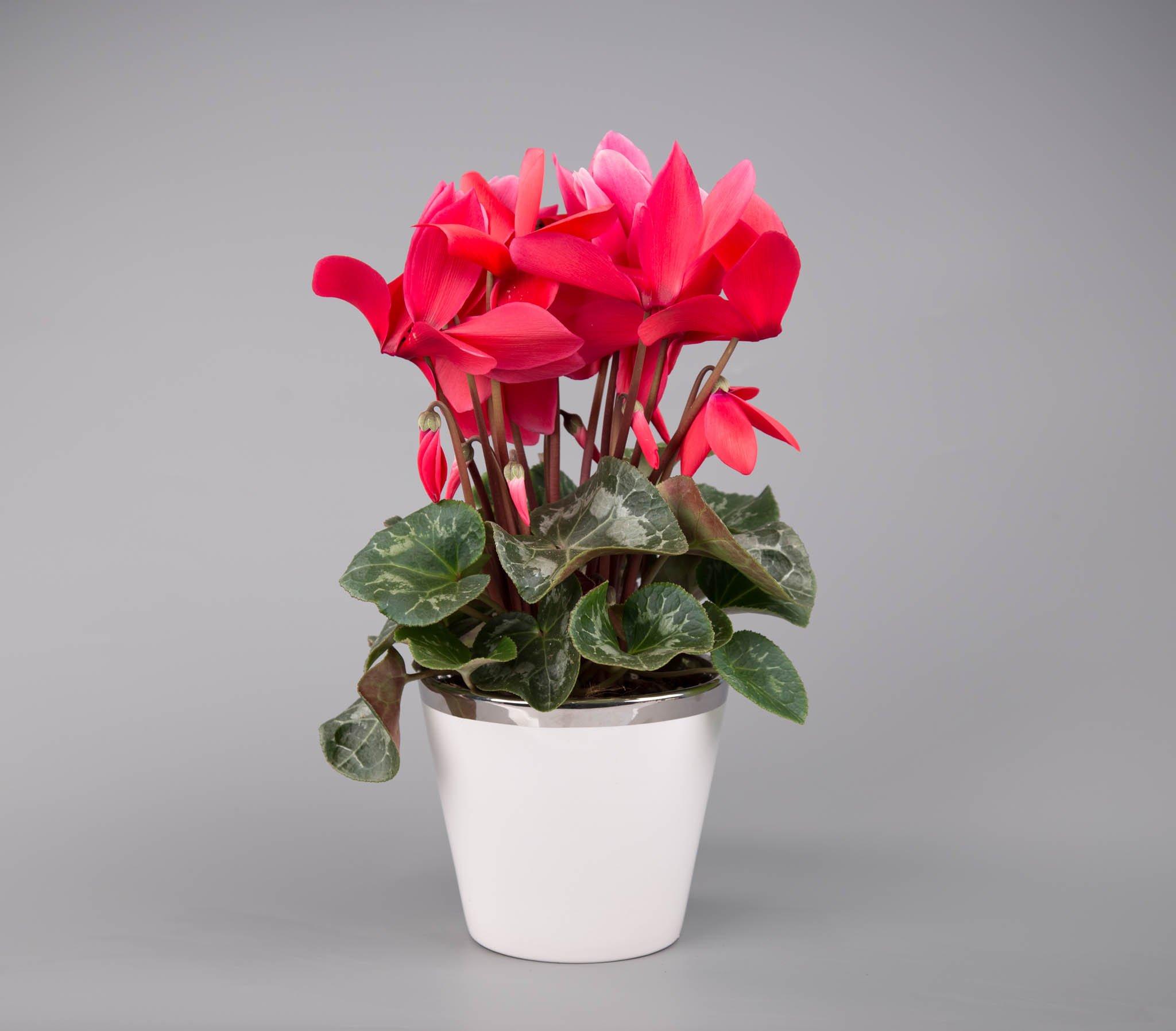Прекрасные цветы даме в открытках человека