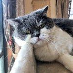 この猫ちゃんの顔…見れば見るほど中尾彬にしか見えない猫がかわいいw