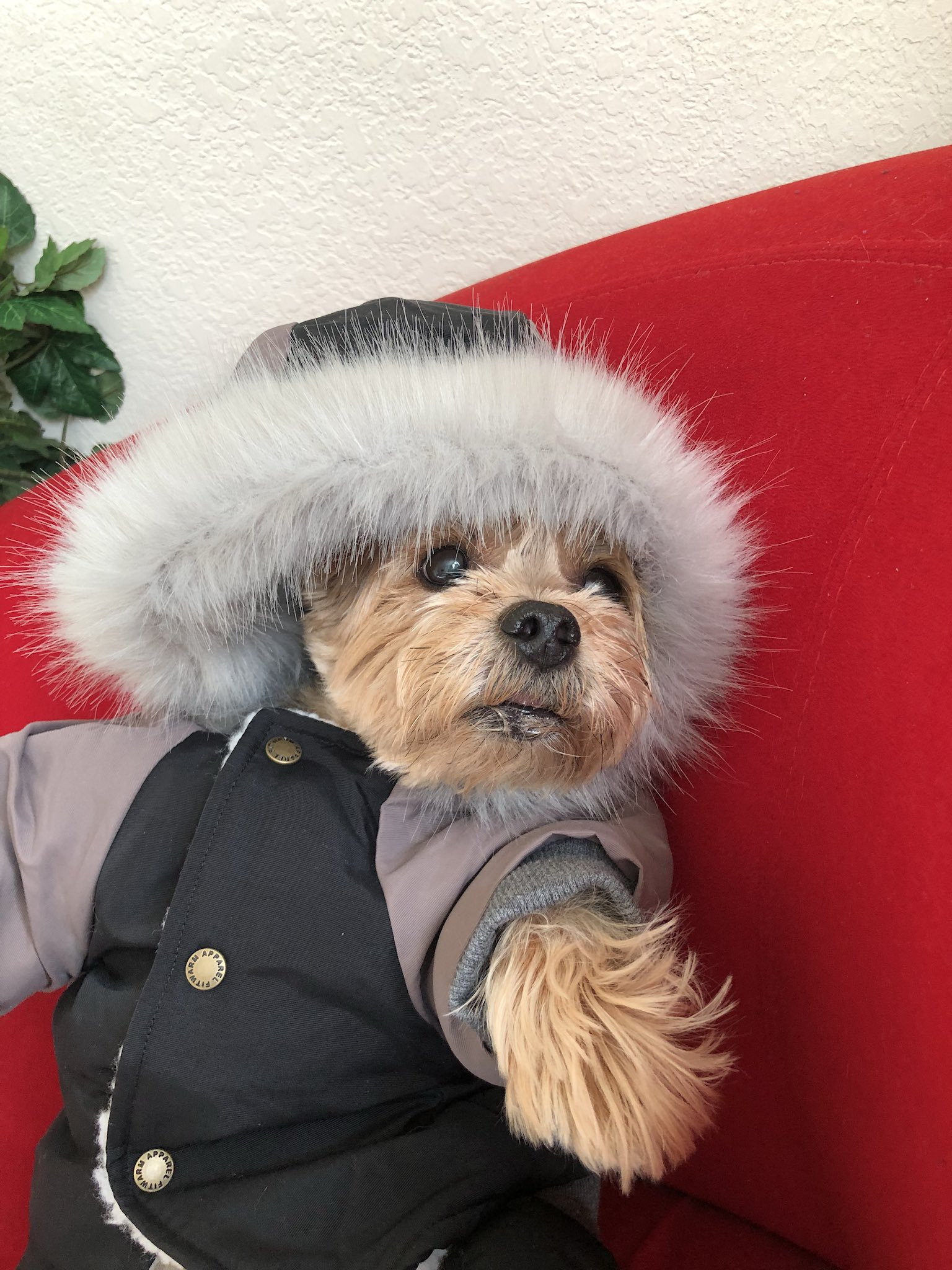#ItsSoCold my dog in the house with his coat on!! Looking at me like nah I'll hold my pee today������‍♀️�� https://t.co/Idndg4Zk7k