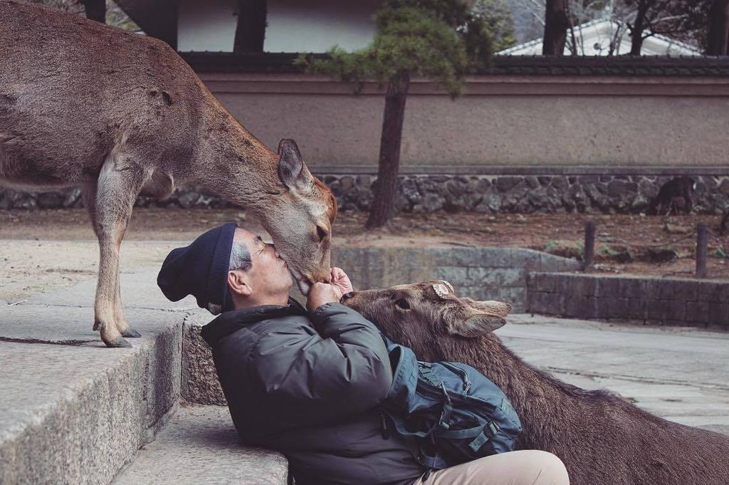 奈良の鹿って可愛いよな 撫でるとニコッ笑顔で返してくれるんだぜ