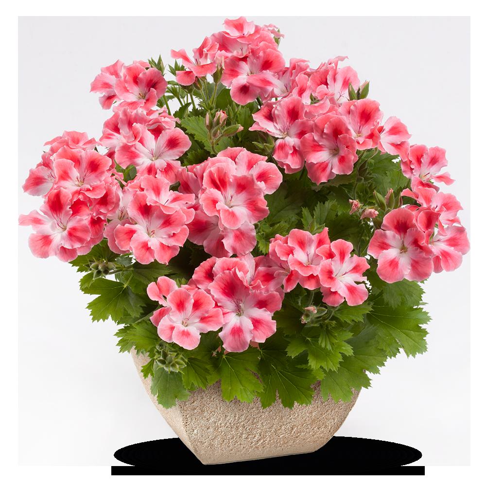 Открытки домашние цветы