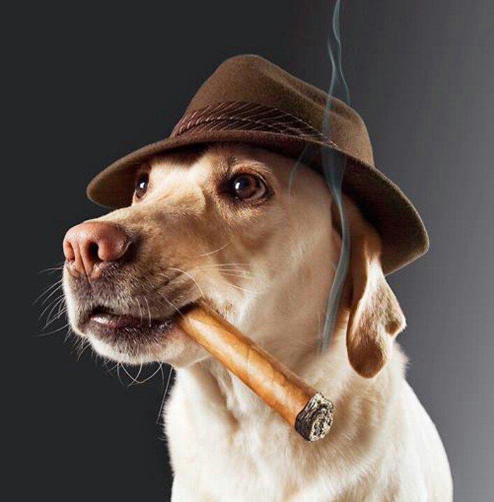 Смешные картинки собаки курят