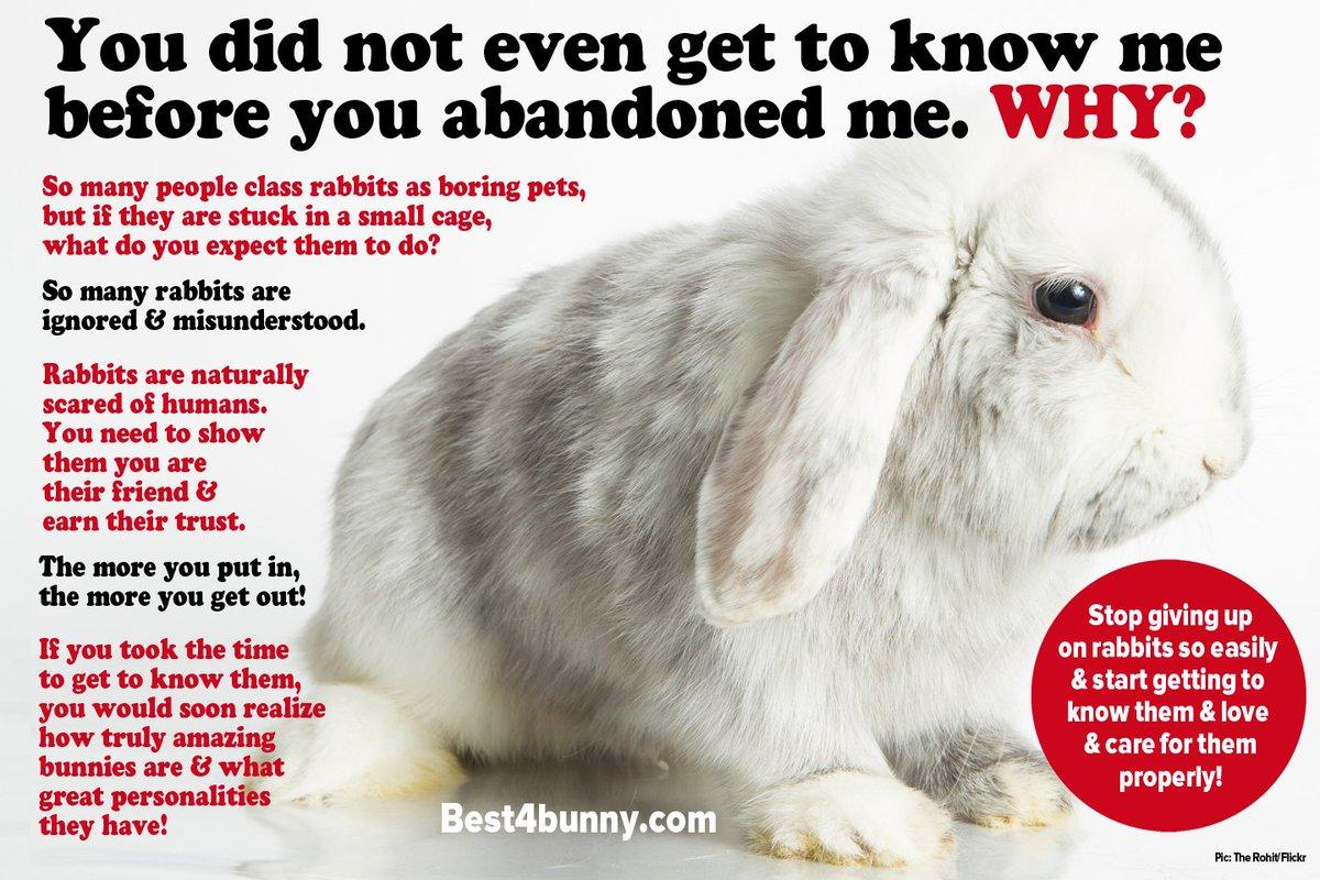 rabbitwelfare hashtag on Twitter