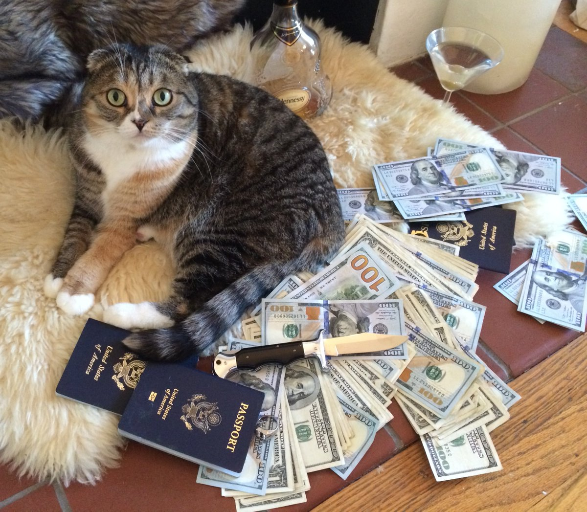 Cats with guns and money