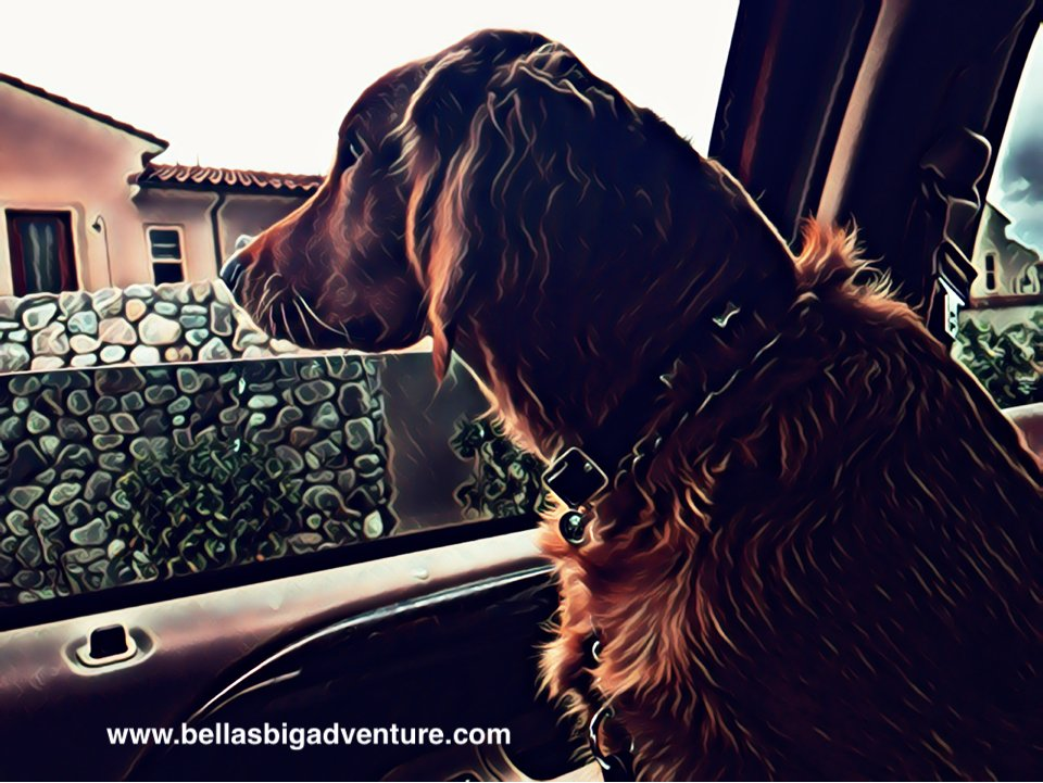 myfriend_bella photo
