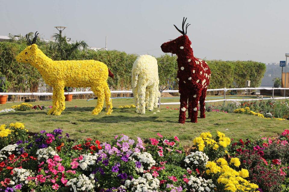 6th Flower Show kicks off at Sabarmati Riverfront, to continue till January 9
