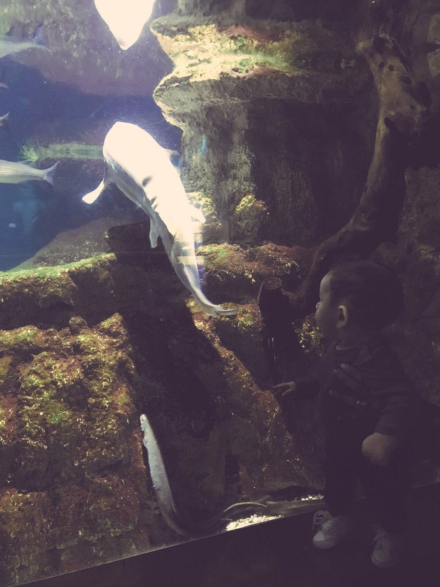 First time ❤️ @AquariumBcn #aquariumbarc...