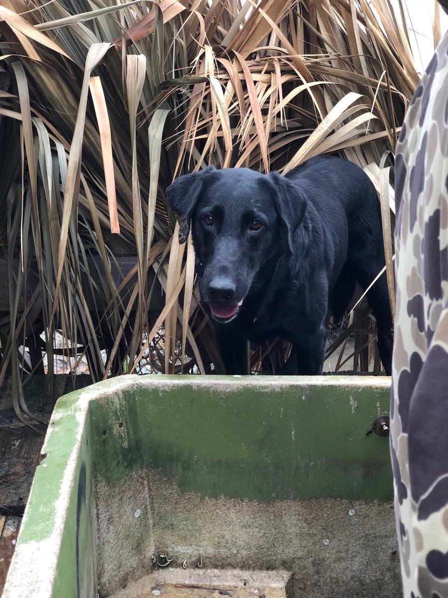 My duck hunting companion. #firedupreadytogo <br>http://pic.twitter.com/y4E8iWroiQ