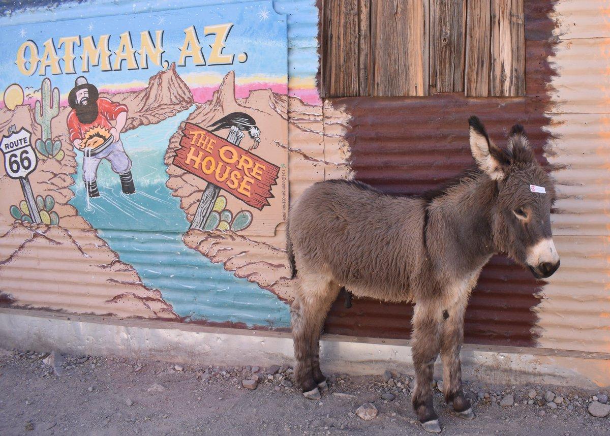 personals in oatman arizona