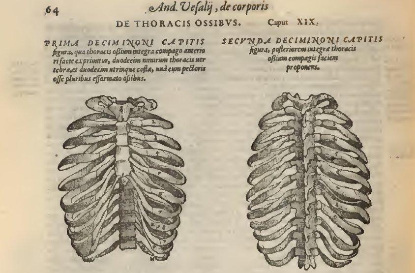 Storiadellamedicina On Twitter Andreas Vesalius The Father Of
