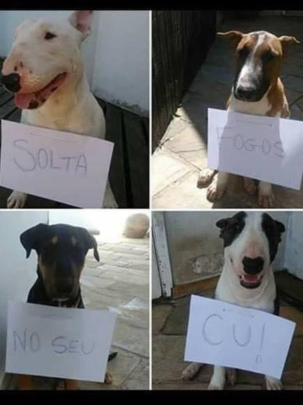 Protesto dos cachorros contra os fogos!