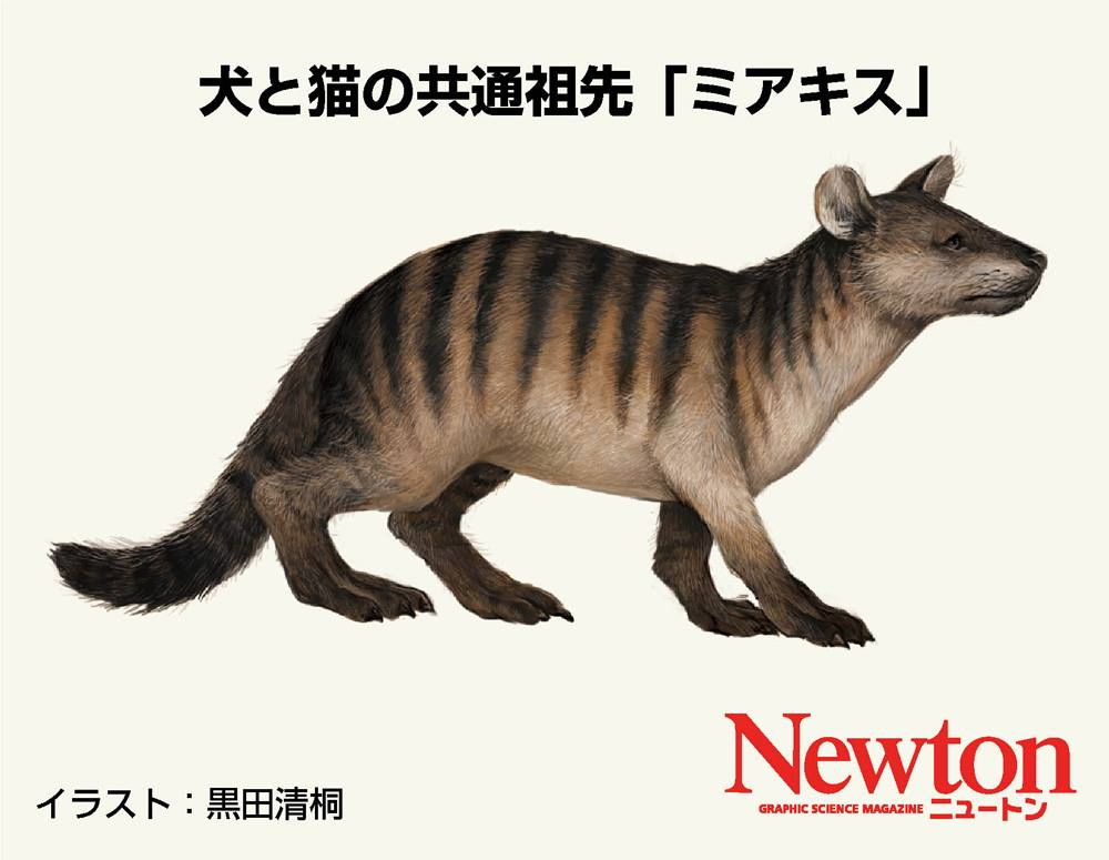 2018年の干支は「戌(いぬ)」です。猫派の皆さんは,そもそも干支に猫が入っていないことが不満かもしれません。でもご安心ください(?)。猫と犬は元々同じ動物であり,別の種に分かれたのは,ほんの5000万年前くらいだそうです。イラストは猫と犬の共通祖先といわれる「ミアキス」という絶滅種。