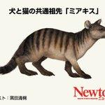 つまり戌年は猫年でもある?科学雑誌ニュートンによると犬と猫の祖先は同じ動物w